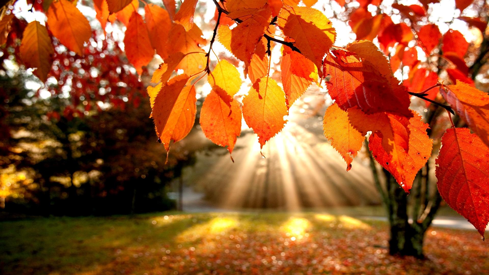 Znalezione obrazy dla zapytania jesien